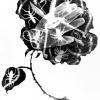 Untitled (Rose #2), 1984
