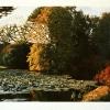 Verdant Pond/Bois De Boulogne, 1997