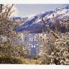 Alpine Blossoms/Gardens at Versallies, 1997