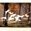 Forest Dawn/Katsura Palce, 1998
