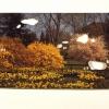 Spring Garden/Ryoan-Ji, 1998