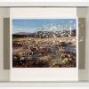 California Desert Wildflowers/French Garden Labyrinths, 1998