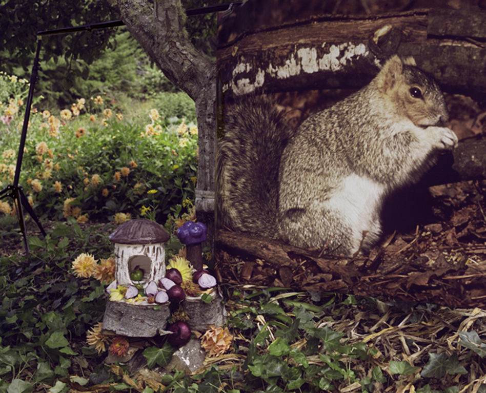 Fox Squirrel with Dahlias and Onions, 2009