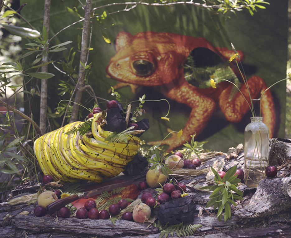 Monte Verde Toad with Coal and Plums, 2009
