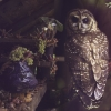 Spotted Owl with Shallots and Grapes, 2010