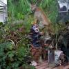 Greenhouse/Florida Panther, 2011