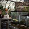 Greenhouse/Greenback Cutthroat Trout