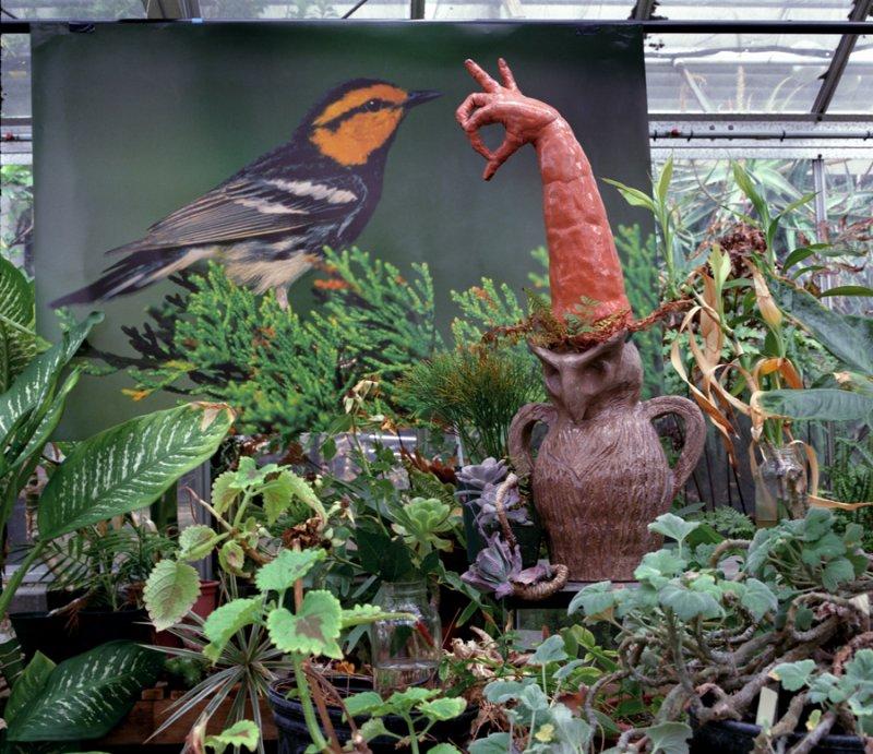 Greenhouse/Golden Cheeked Warbler, 2012