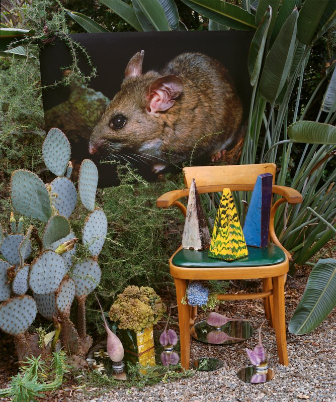Riparian Wood Rat with Radishes, 2016